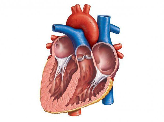 Миксома сердца: причины, патофизиология, диагностика, лечение, прогноз