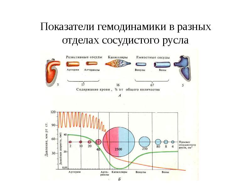 Показатели гемодинамики