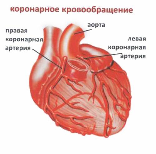 Патофизиология коронарного кровообращения