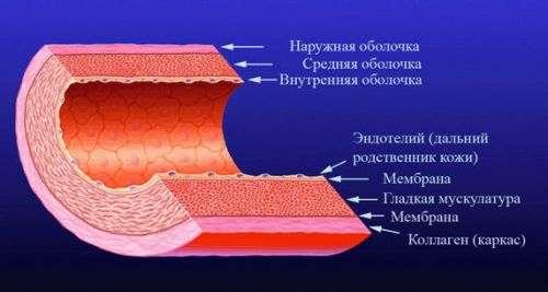 Патофизиология эндотелия коронарных сосудов