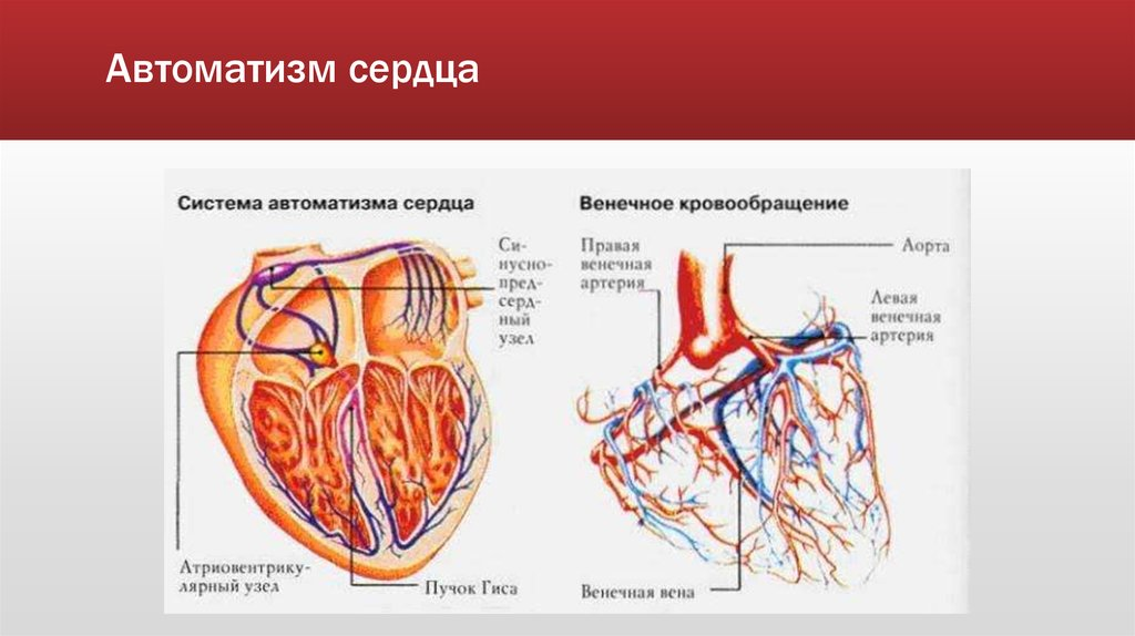 Нарушения сердечного автоматизма
